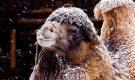 В Египте прошел снегопад