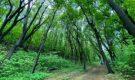Прокуратура Киржачского района вновь обратила внимание на махинации с лесом в «вотчине» Букалова